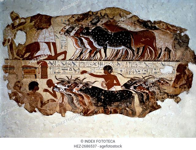Inspection of cattle. Fresco from the tomb of Nebamun at Thebes