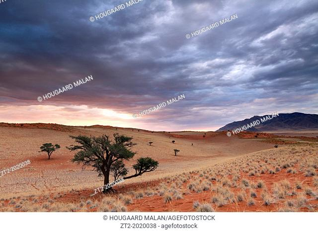 Landscape photo of a stormy sunset in the over dunes dotted with Acacia trees. Namib Rand, Namibia