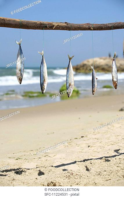 Fish hanging from a stick at the beach