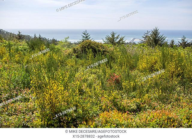 Flowers and natural shrubs along the coast