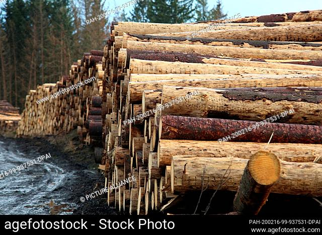 """16 February 2020, Saxony-Anhalt, Elbingerode: A timber store near Elbingerode shows the extent of the hurricane damage. Stormtorm """"""""Sabine"""""""" has caused great..."""