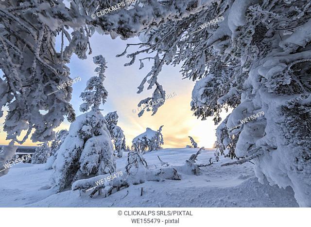 Frozen tree branches and snowy landscape in the cold arctic winter Ruka Kuusamo Ostrobothnia region Lapland Finland Europe