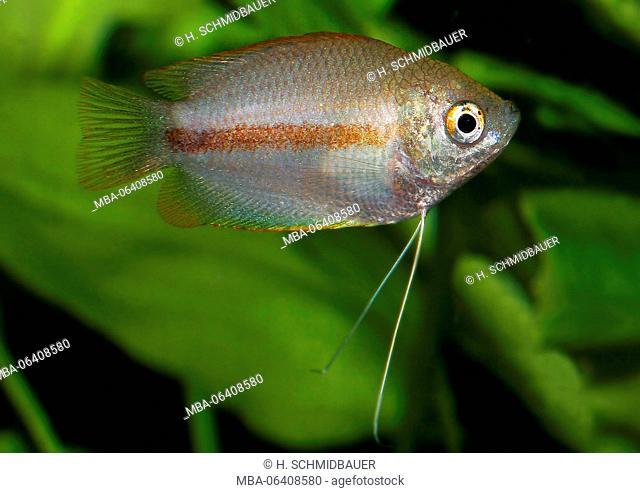 Fish Bangladesh Stock Photos And Images Age Fotostock