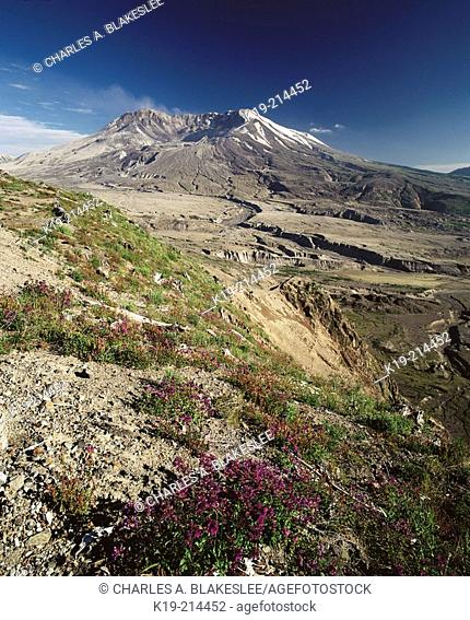 Mount St. Helens National Volcanic Monument (afternoon August). Washington. USA
