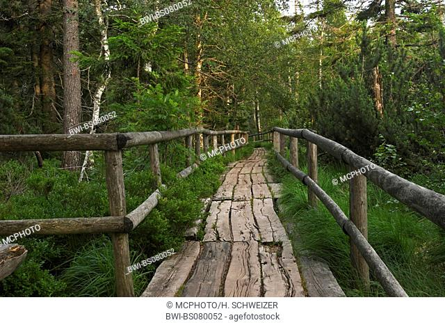 boardwalk at Hohlohsee, Germany, Baden Wuerttemberg, Black Forest