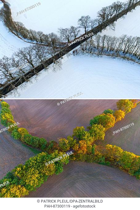 COMBO - The 2-part composite picture shows the same lines of trees near Sieversdorf, Germany, in winter on 17 January 2017 (top) and in autumn on 30 October...