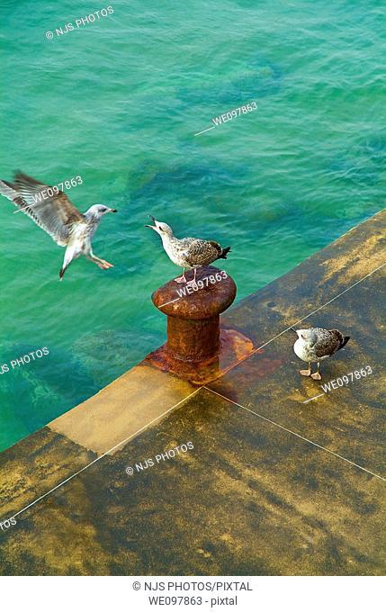 Seagulls on the dock, San Sebastián, Guipuzcoa, Basque Country, Spain