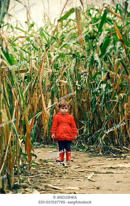 Portrait of a cute funny adorable baby toddler in red jacket and blue jeans standing on corn field on a farm. Halloween Thanksgiving card