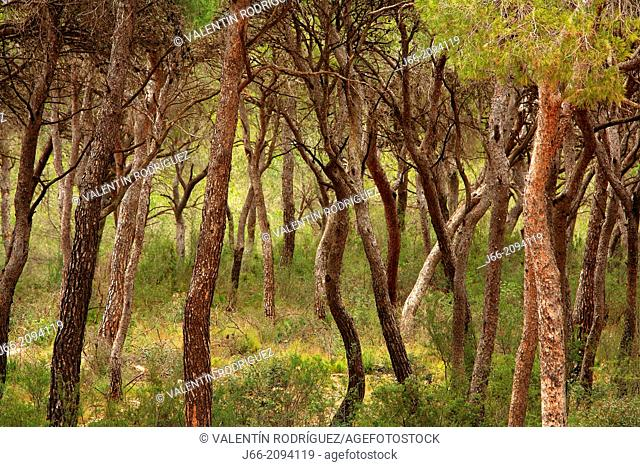 forested landscape in the natural park Calderona. Valencia