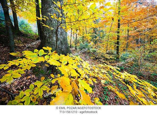 Autumn in the forest, colorful leaves