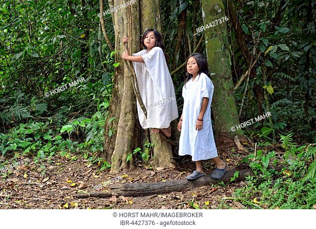 Tribal children, Lacandon boys, typical white shirts, last descendants of Maya, ancient Maya archaeological site, Bonampak, Lacanja Chansayab, Chiapas, Mexico