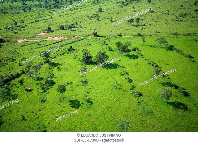 Field, Grassy, Pasture, Aquidauana, Mato Grosso do Sul, Brazil
