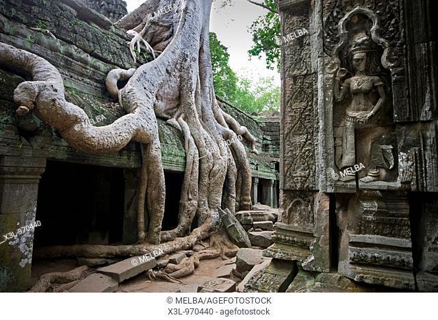 Ta Prom temple  Angkor site  Cambodia