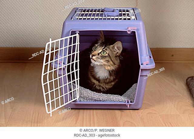Norwegian Forest Cat in transport kennel