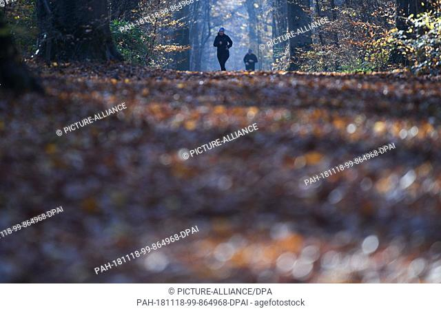 18 November 2018, Hessen, Frankfurt/Main: Joggers are out and about in Frankfurt's autumn city forest. Photo: Arne Dedert/dpa