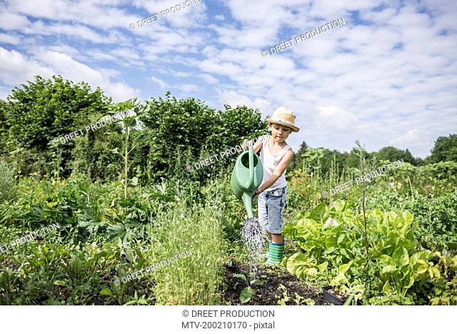 Little boy watering seedling in a community garden, Bavaria, Germany