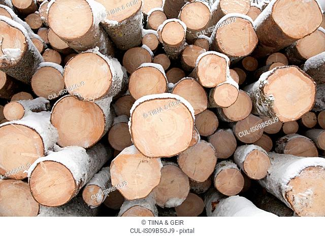 Cross section of logs in stack