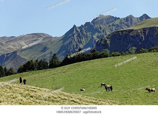 France, Puy de Dome, Parc Naturel Regional des Volcans d'Auvergne Regional Nature Park of Auvergne Volcanoes, Massif des Monts Dore, Puy de Sancy Mountain
