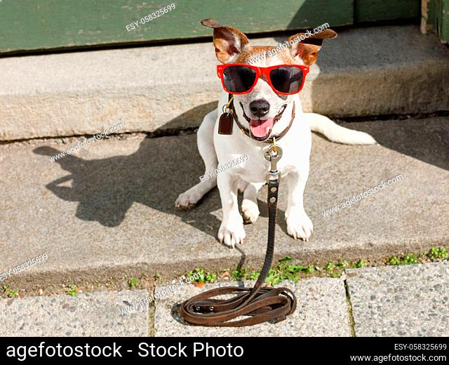 jack russell dog waiting for owner to play and go for a walk with leash outdoors at the door
