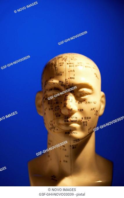 Phrenology Head on Blue Background