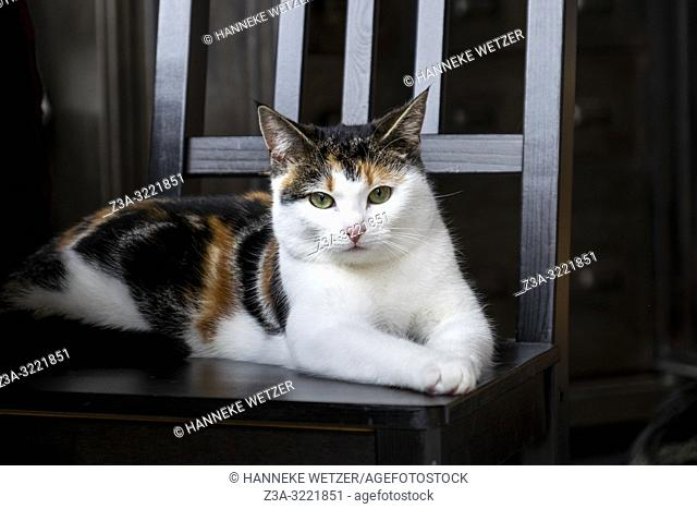 Cute kitten chilling on a chair