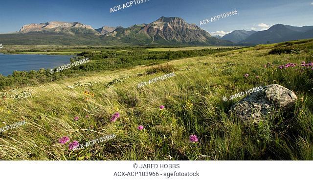 scenic mountain view of Bison Paddock, Waterton, Grasslands, Alberta, Canada