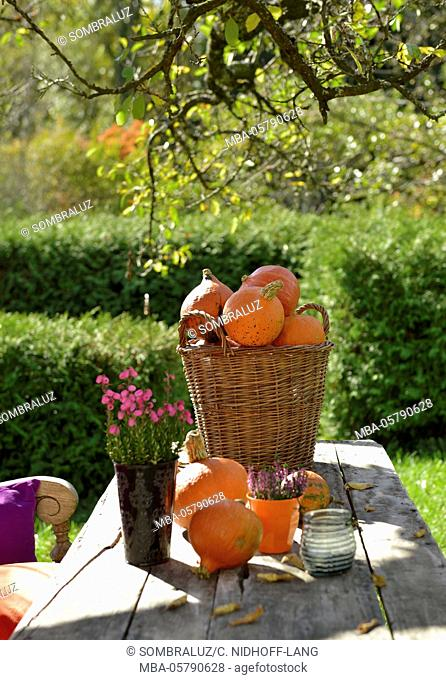 wooden table with pumpkin basket