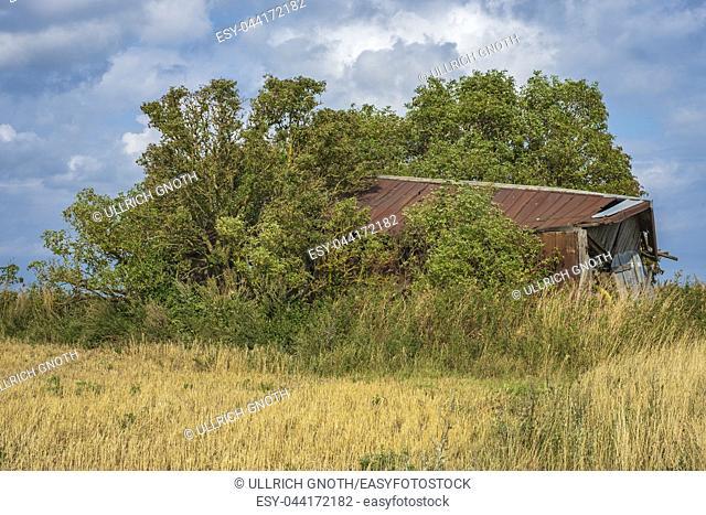 Old decayed shed on a field on Nyord Island north of Moen, Denmark, Scandinavia, Europe. Alter verfallener Schuppen auf einem Feld auf der Insel Nyord nördlich...