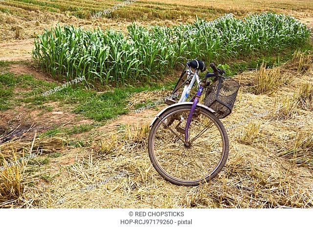 Bicycle in a field, Zhigou, Shandong Province, China