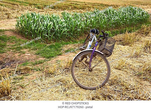 Bicycle in a field, Zhigou, Shandong Province, China