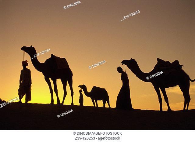 Camel caravan. Rajasthan. India