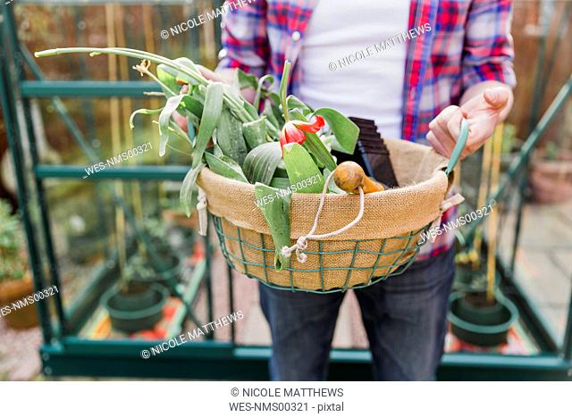 Close-up of man holding basket with flowers before greenhouse in garden