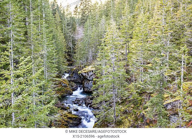 One of the famous waterfalls in the Olympic Peninsula isolated at the top of the mountains and divides a forest in half