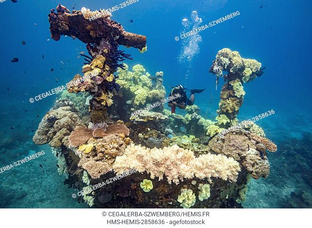 Philippines, Mindoro, Apo Reef Natural Park, diver on a wreck of a fishing boat covered by corals