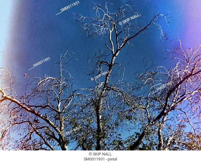 The bare branches of a tree during the winter