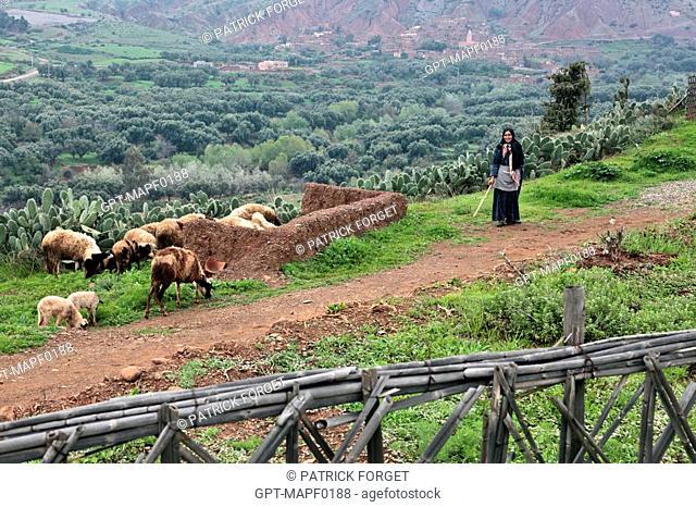 BERBER SHEPHERDESS WITH HER FLOCK, TERRES D'AMANAR, TAHANAOUTE, AL HAOUZ, MOROCCO