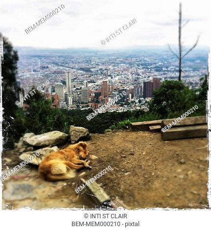 Dog sleeping on hilltop over large city, Bogota, Cundinamarca, Colombia