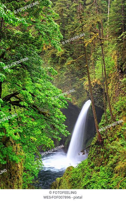 USA, Oregon, Hood River County, Columbia River Gorge, Eagle Creek, Metlako Falls