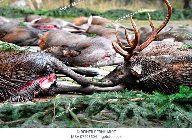 Killed game, driven hunt