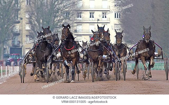Horse racing, French Trotter, harness racing at racecourse, Caen, Normandy, France