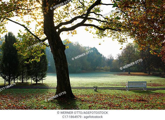 D-Bad Driburg, nature reserve Teutoburgian Forest / Eggegebirge, East Westphalia, Westphalia, North Rhine-Westphalia, NRW, Graeflicher Park Bad Driburg