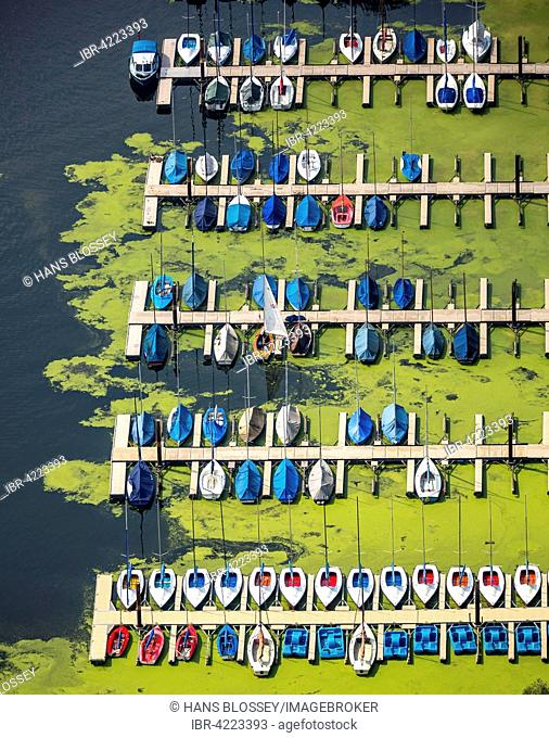 Jetty for sailboats, waterweed (Elodea), Kemnader Reservoir, Bochum, Ruhr district, North Rhine-Westphalia, Germany