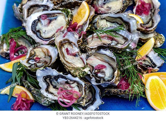 New Zealand Oysters For Sale, Waipu, North Island, New Zealand