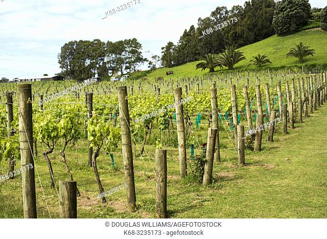 Winery on Waiheke Island, near Auckland, Hauraki Gulf, New Zealand
