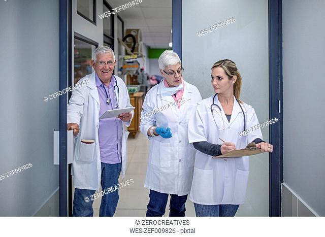 Three veterinarians on the corridor