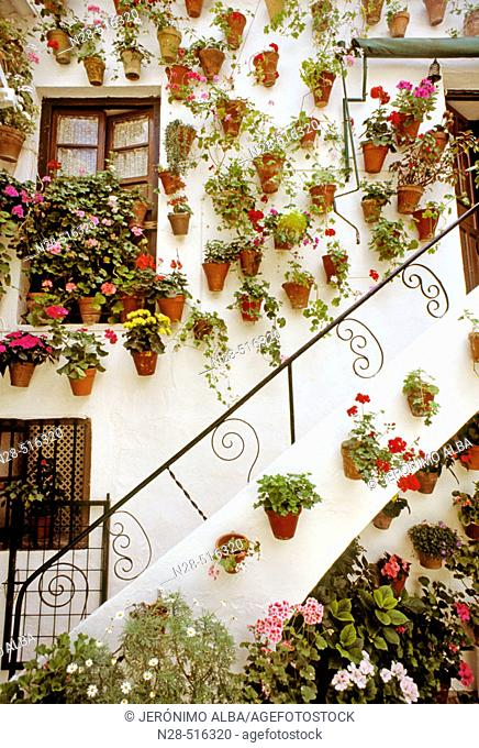 Typical 'patio' in Calle San Basilio, Córdoba. Andalusia, Spain