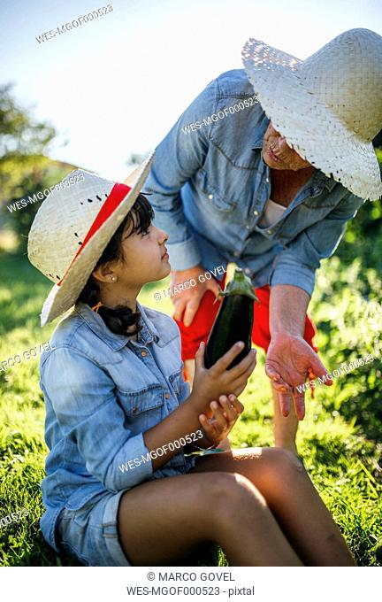 Senior woman and her granddaughter harvesting vegetables in the garden