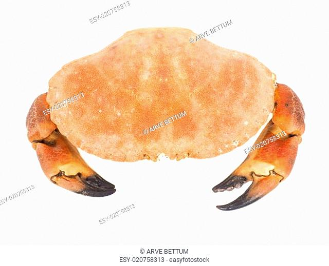 Boiled orange colored crab