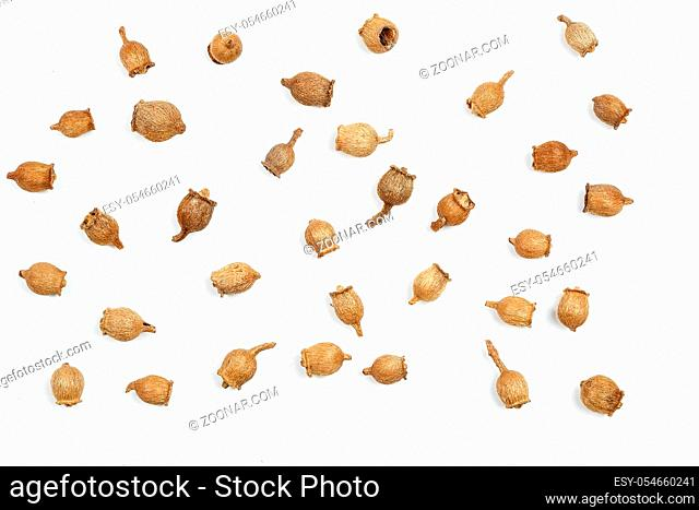 collage. spruce cones on white isolated background