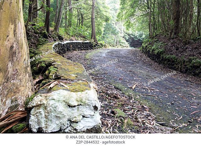 Mata de Serreta nature reserve in Terceira island Azores Portugal